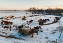 "Photo by Rick Pepper - The Horses of the 2012 Dakota 38+2 riders pastured at the farm of Sylvester ""Ken"" Ziegler"