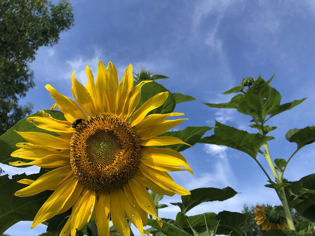 Photo by Molly Butler - Living Earth Center in Mankato